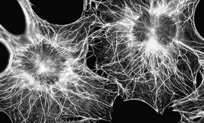Стволовые клетки кожи волос
