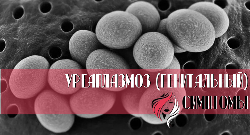 Уреаплазмоз (генитальный) - заболевание, передаваемое только половым путем